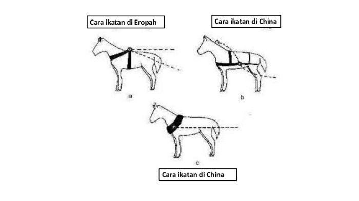 Kolar Kuda cheestory